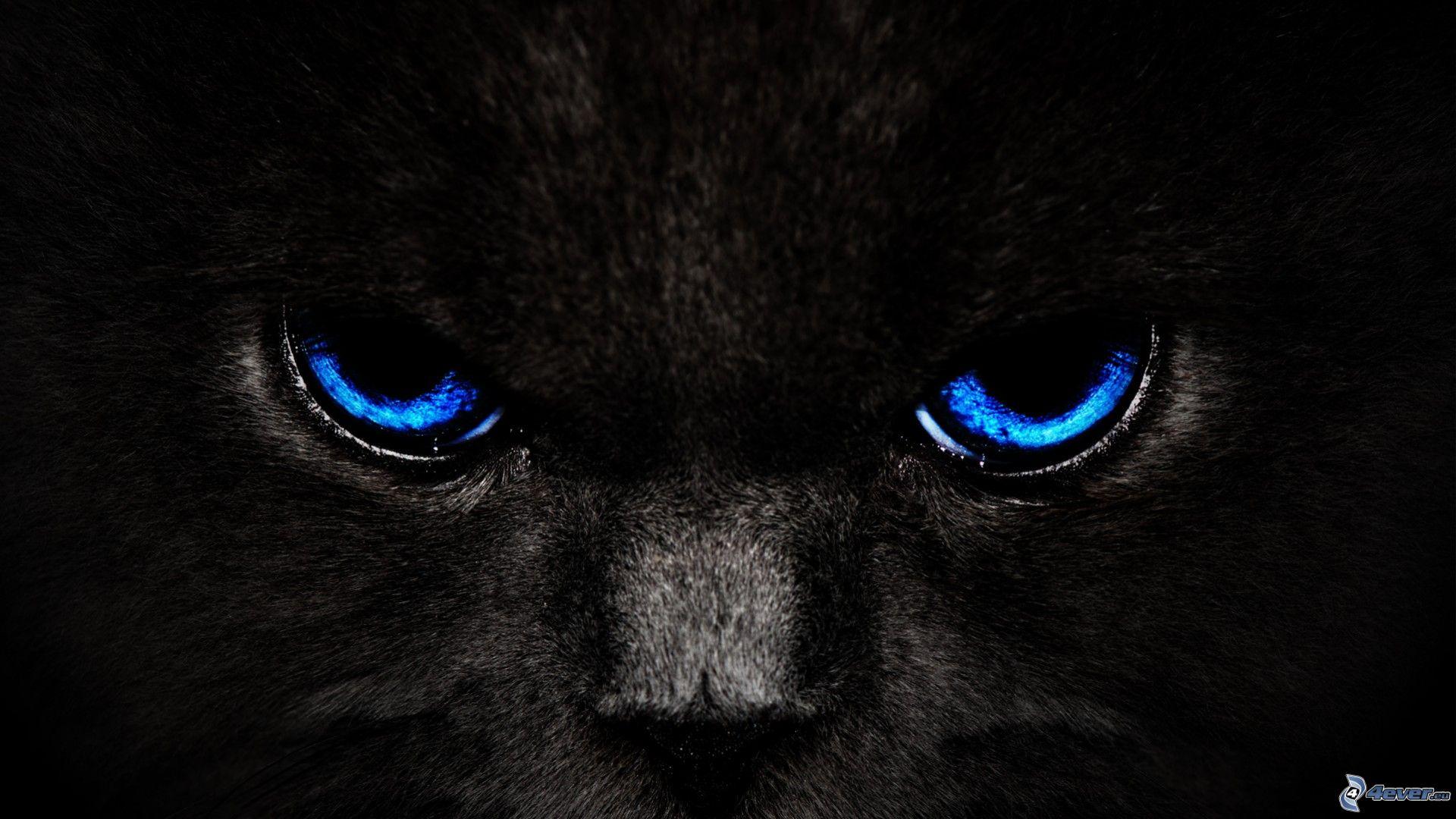 blue eyes wallpaper 2048x1152 - photo #5