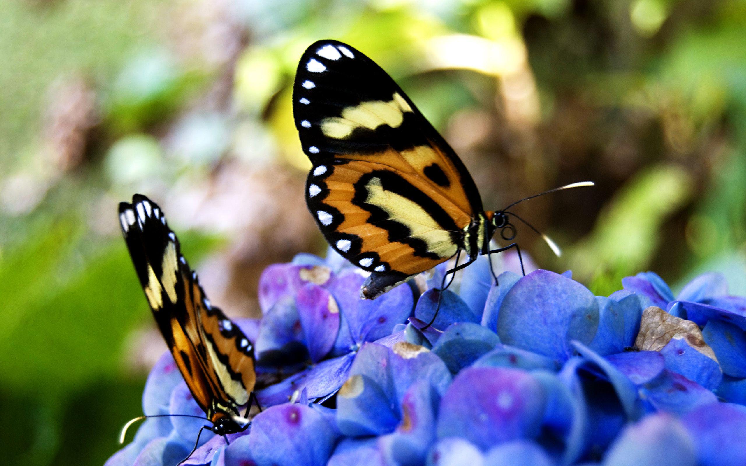 Farfalle sui fiori for Sfondi con farfalle