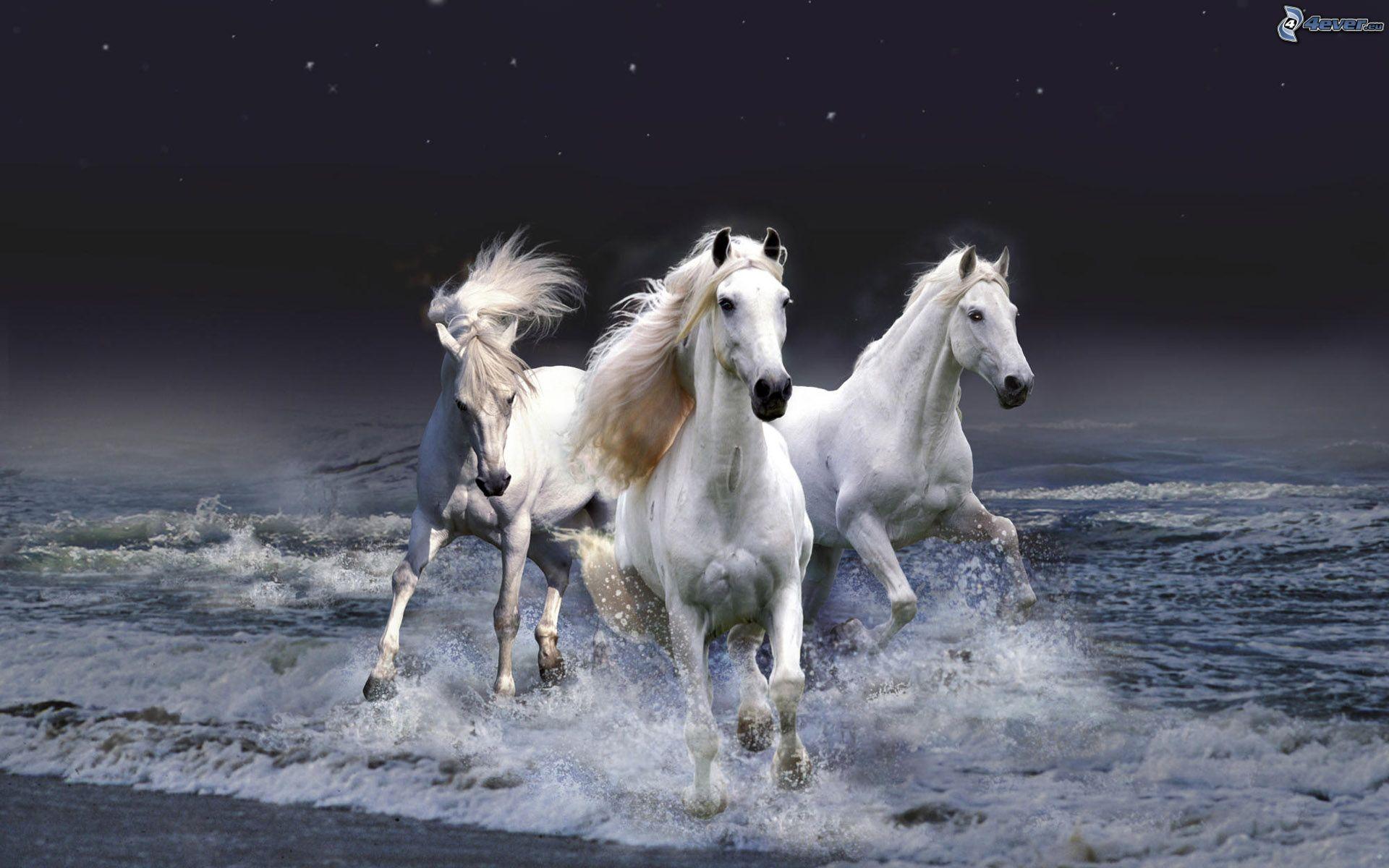 Popolare Cavalli bianchi MB06