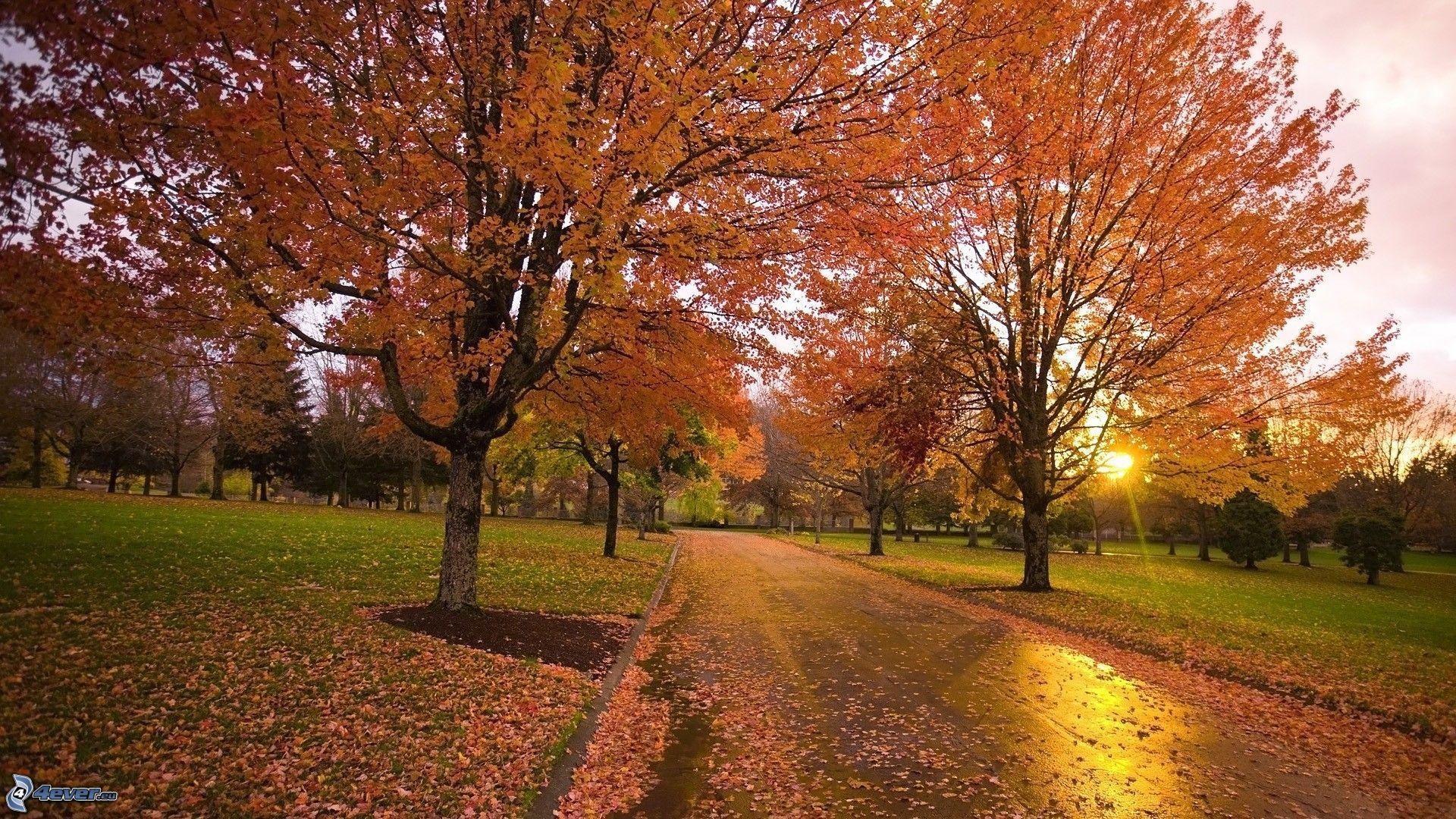 Immagini autunnali x desktop alberi autunnali for Sfondilandia primavera