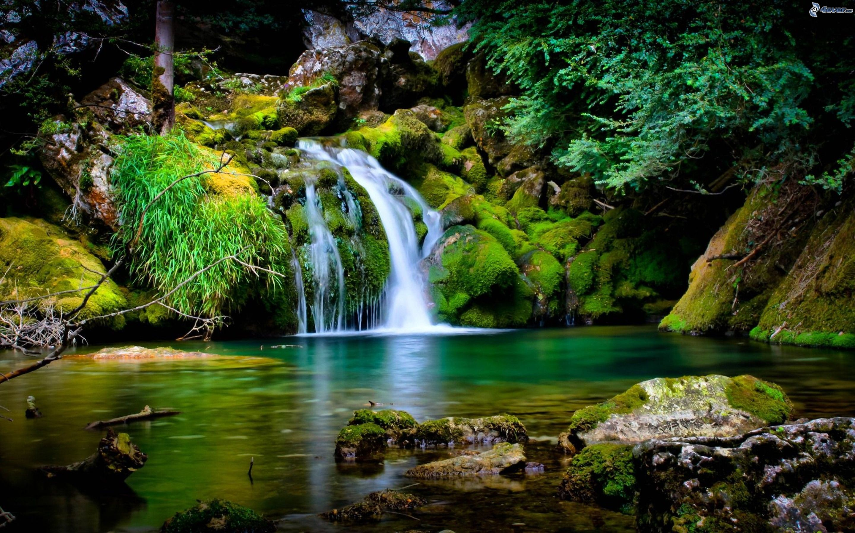 Cascata forestale for Cascata per laghetto