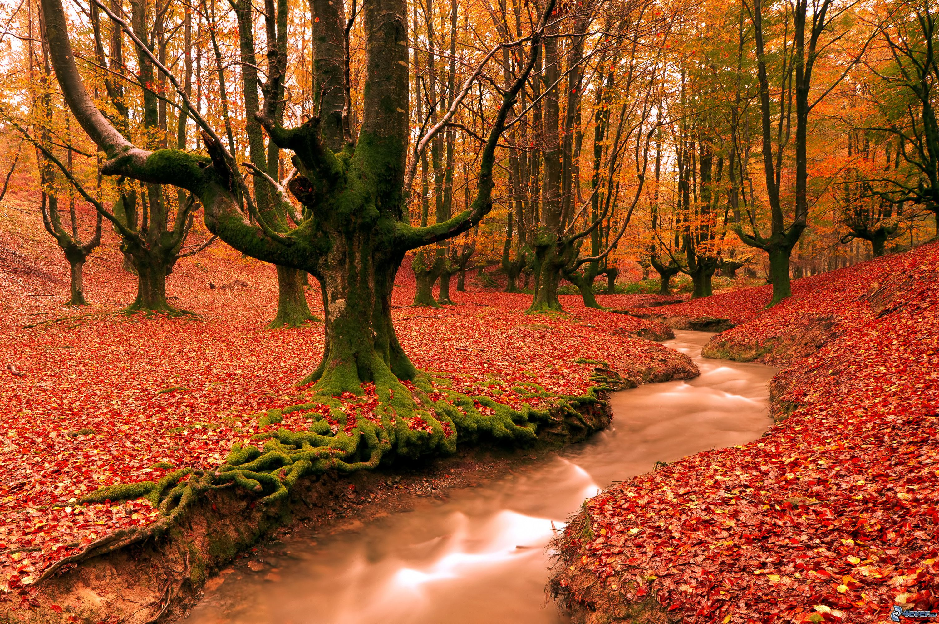 Foresta rossa di autunno for Immagini autunno hd