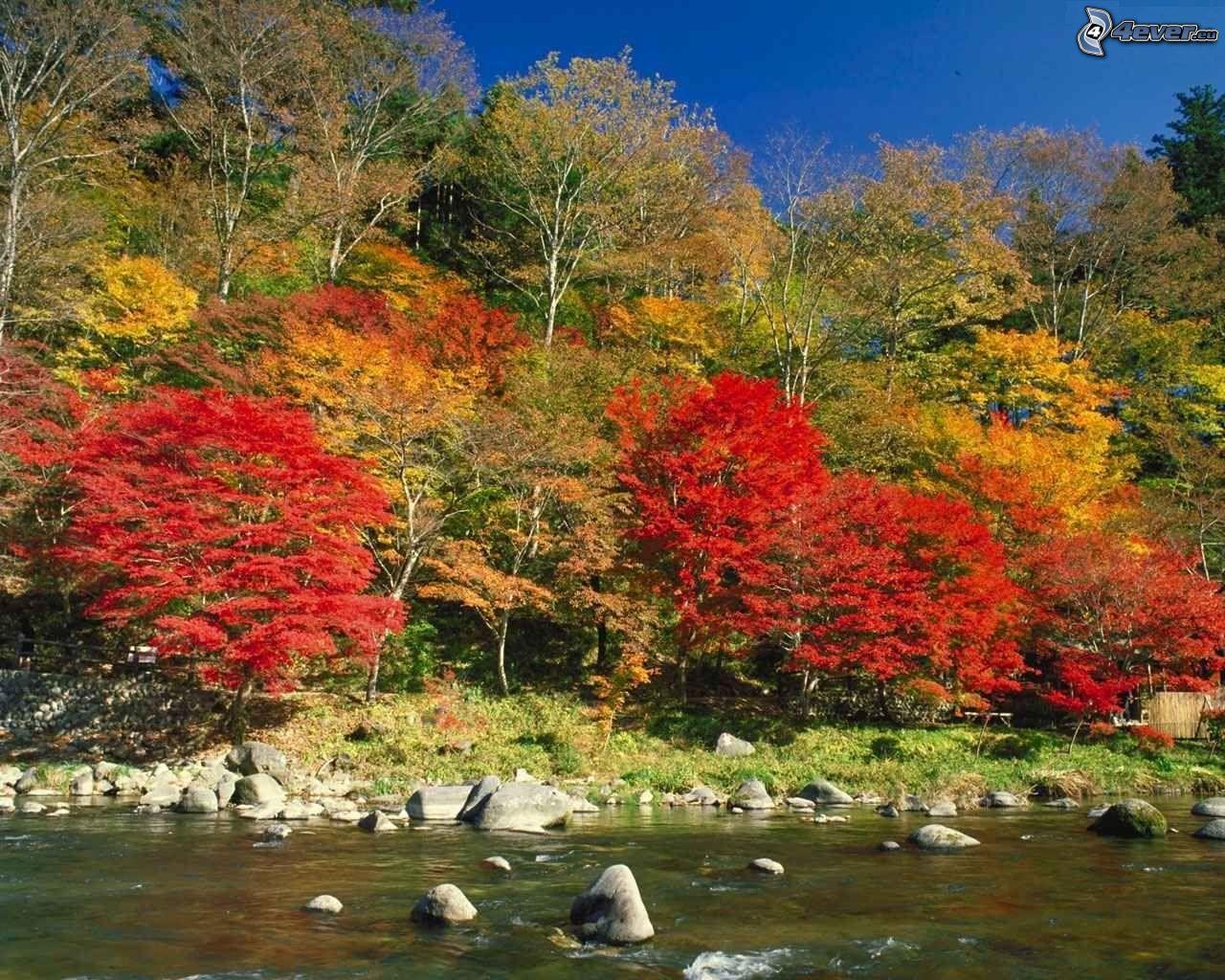 Alberi di autunno in riva al fiume for Immagini autunno hd