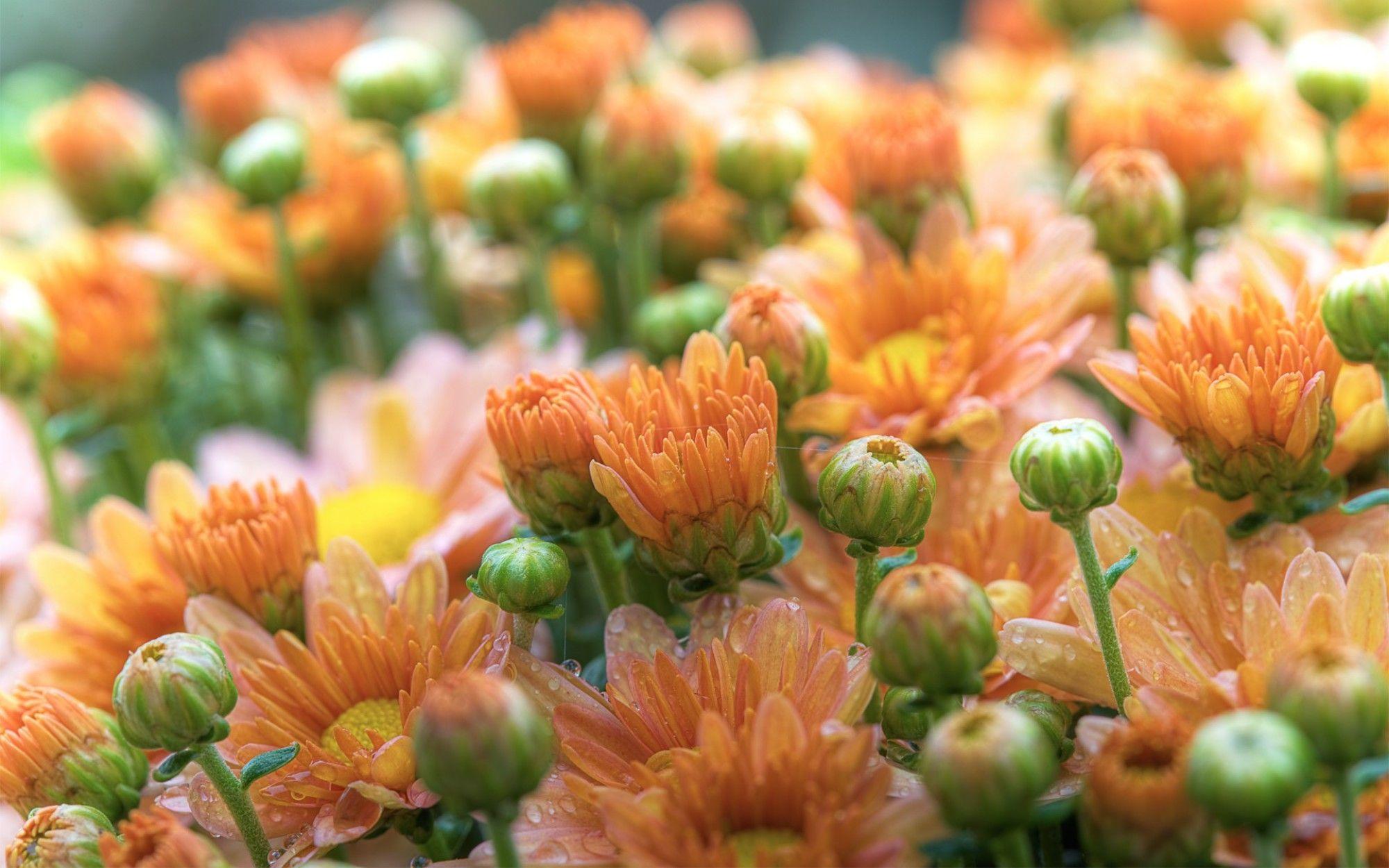 Fiori Arancioni.Fiori Arancioni