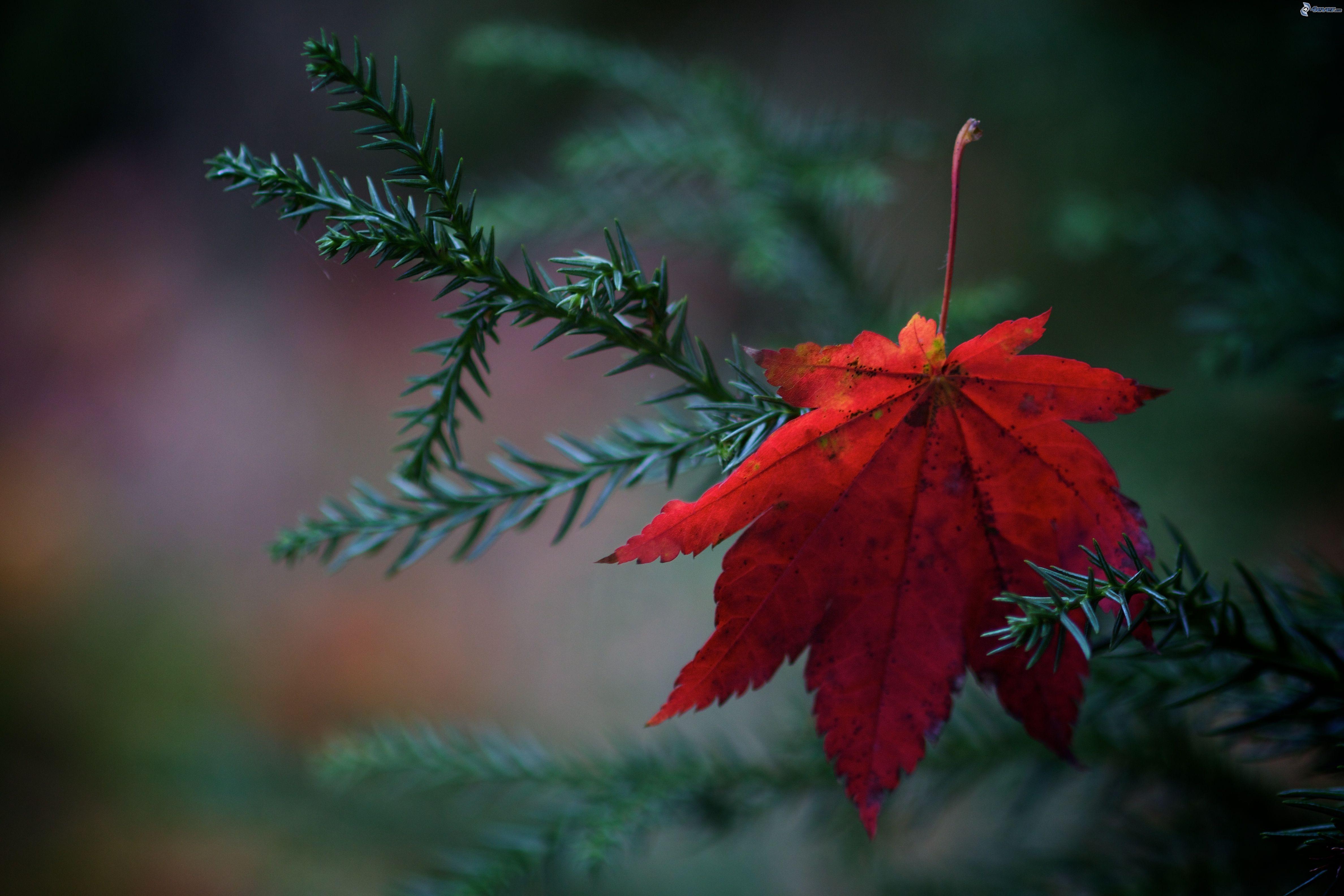 Foglie rosse in autunno
