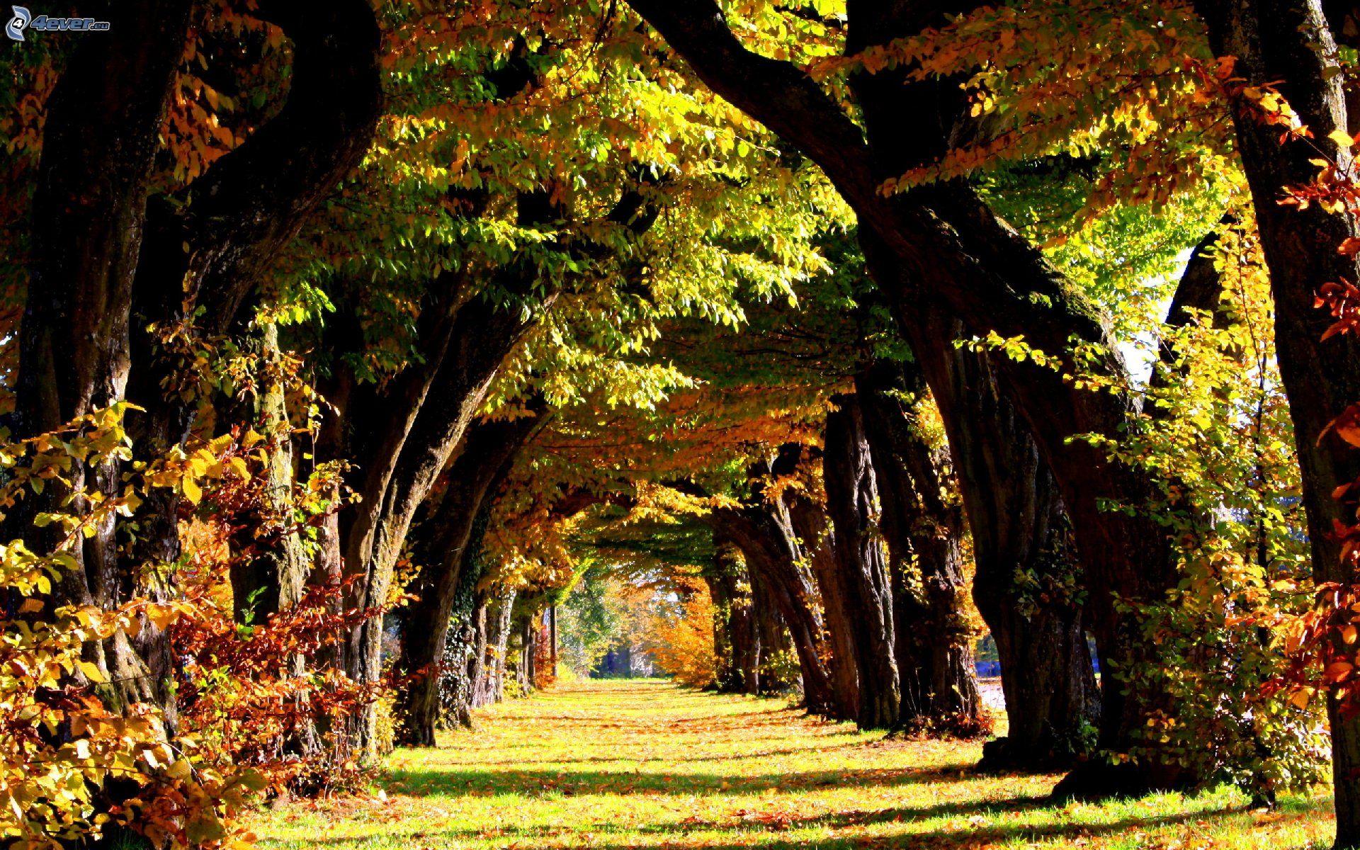 Viale albero for Immagini autunno hd