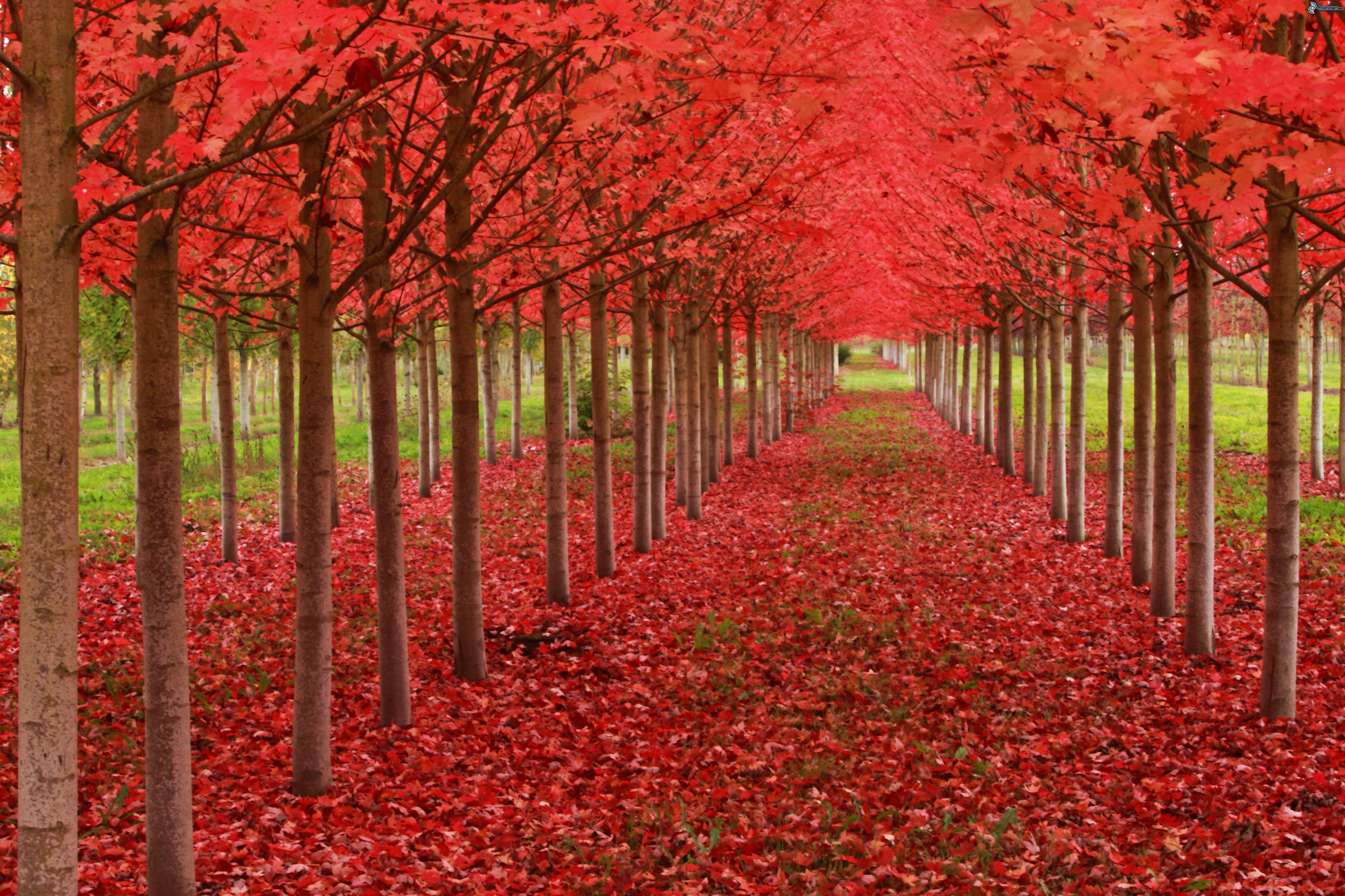 Viale albero